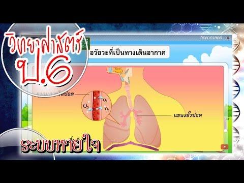 ระบบหายใจ - วิทยาศาสตร์ ป.6