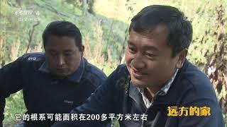 《远方的家》 20191006 大好河山 天山南北好风光| CCTV中文国际