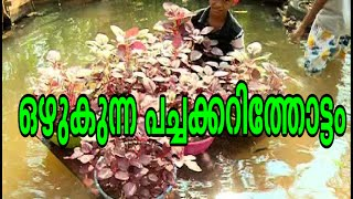 Shaji 's  Floating vegetable garden : Asianet News special