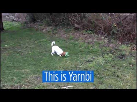 Yarnbi, the self-fetching dog