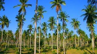 Plantations, Big Island, Hawaii, United States, North America