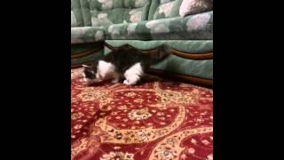 У кошки забрали мышь..