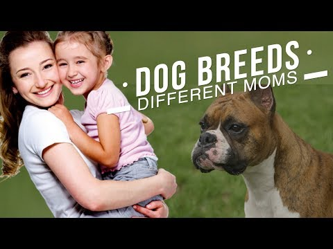 DIFFERENT DOG BREEDS FOR DIFFERENT MOMS