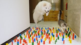 Dog and Cat : Obstacle Challenge