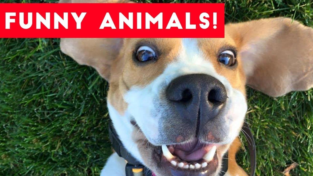 FUNNY HORSES ★ Funny Horse Videos [Funny Pets] - YouTube |Youtube Pets Funny Horses
