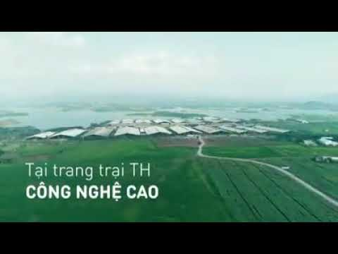 Video quảng cáo sữa cao cấp TH – TRUE MILK