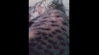 Как у кошки за день до родов шевелятся котята