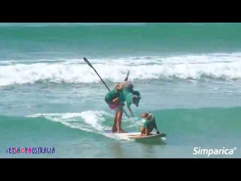 Surfing Dog Championships 2019