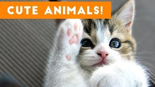 Cutest Pets of the Week Compilation November 2017 | Funny Pet Videos