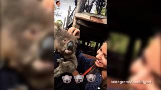 Ansel Elgort and girlfriend Violetta Komyshan visit Australia