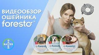 Ошейник Foresto от клещей и блох. Видеообзор от производителя. Защита на 8 месяцев(, 2018-03-07T13:47:00.000Z)
