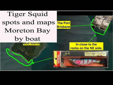 Squid Fishing Moreton Bay By Boat, Maps, Spots And Bait 2018