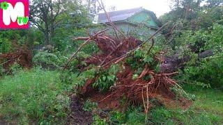 Ураган в городе Тверь Последствия урагана Тверь Первомайский 11 06 2016(В городе Тверь, в районе Первомайский, 11 июня прошел большой ураган. Много деревьев вырвало с корнем, деревь..., 2016-06-12T16:04:42.000Z)