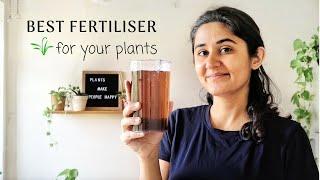Best Fertiliser for Plants at Home