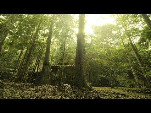Traditional Malay Music - Malay Jungle