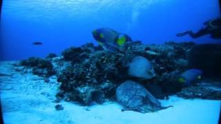 360 Video shot off of Cozumel, Mexico while diving with Blue Angel Diveshop and Scuba School.