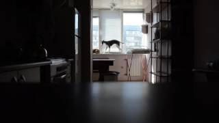 Собаки одни дома