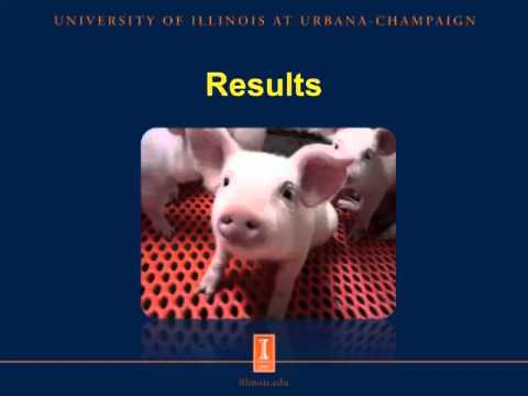 Phosphorus And Amino Acid Digestibility In Fermented Soybean Meal Fed To Weanling Pigs