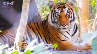 Gambar cover Wild Animals with Floating Music - 4K Ultra HD [30fps]