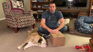 reuben-the-bulldog-holidays-with-lincoln-s-world
