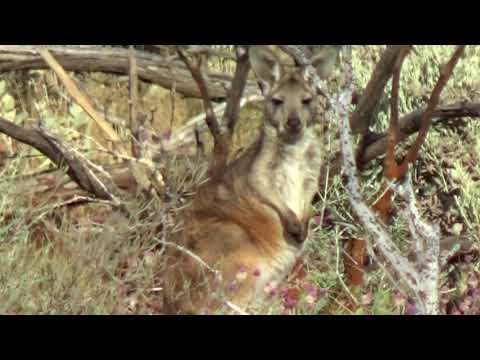 Gold/Metal Detecting Western Australia 2017 pt 3
