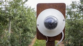 Digital oversight - Doing much more than mechanizing the orchard