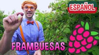 Blippi Español Visita una Fábrica de Frambuesas | Nuevo Video! | Videos Educativos para Niños