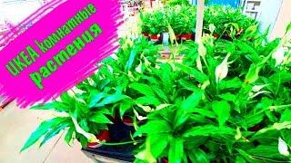 Икеа  ОРХИДЕИ ???? Новинки - комнатные растения! Обзор на живые цветы в ИКЕА /