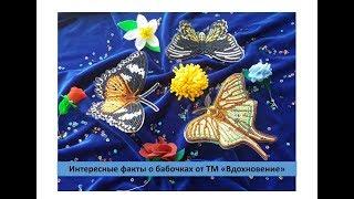 Интересные факты о бабочках от ТМ