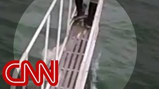 Watch shark jump at scientist on boat