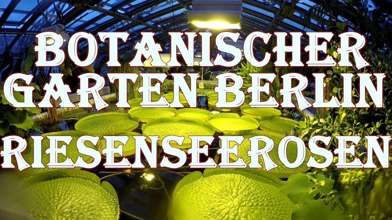 Victoriahaus Riesenseerosen Sommer 2018 Botanischer Garten Berlin