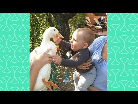 Baby and Duck funny moment - Cute Babies and Pets Compilation