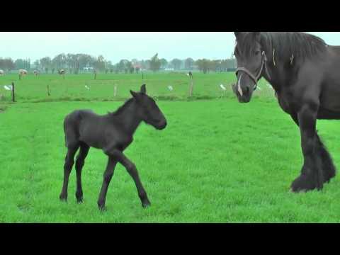 Видео для детей красивые лошади играют | Маленькие лошади играют