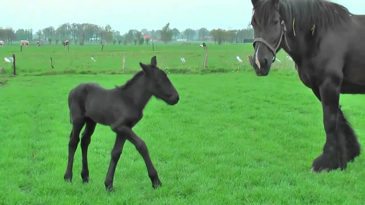 Видео для детей красивые лошади играют   Маленькие лошади ...