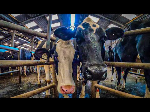 A Day In The Life of a Dairy Farmer
