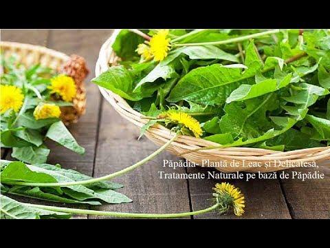 Păpădia- Plantă de Leac și Delicatesă, Tratamente Naturale pe bază de Păpădie
