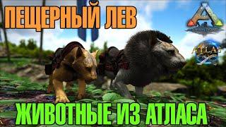 ARK  Survival Evolved - ПЕЩЕРНЫЙ ЛЕВ! ЖИВОТНЫЕ ИЗ АТЛАСА! МОД! MOD! ANIMALS FROM ATLAS! CAVE LION!