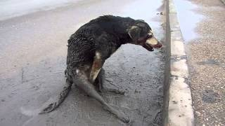 Пёс-ДТП-перелом позвоночника,возле Автобани.(, 2012-12-05T16:45:54.000Z)