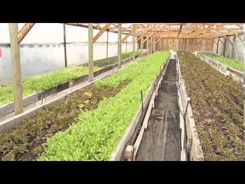 Organic Greens at SunTrio Farm - Shaw TV Victoria