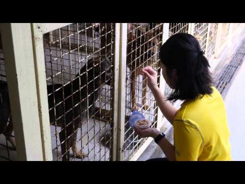A visit to SPCA