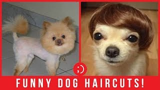 23 Funny Dog Grooming Haircuts Compilation That Will Either Make You Laugh or Cringe