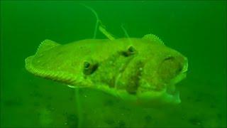 flounder fluke fishing underwater bait vs jig