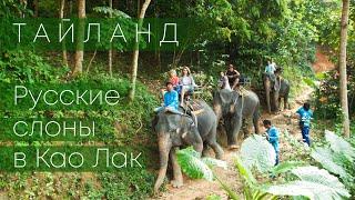 Таких веселых Тайских слонов вы еще не видели