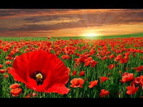 Poem:~'In Flanders Fields' by John McCrae ~ Read by Anthony Davies.