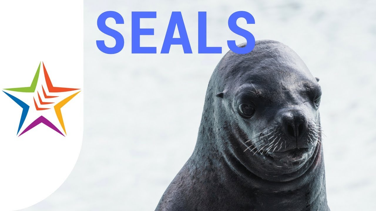 what noise do seals make