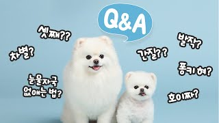 A Q&A session about Rudy and Pongki that you have been waiting for! / Sharing unreleased videos!!!