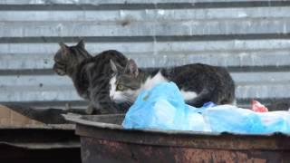 Kissoja Atyrayssa / Cats in Atyray, Kazakhstan
