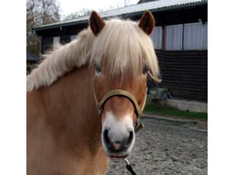 Kinder Lieder Ein Pferd Ging Zum Friseur Jo Josephine
