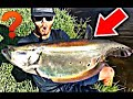 insane day of bass fishing clown knife caught on artificial