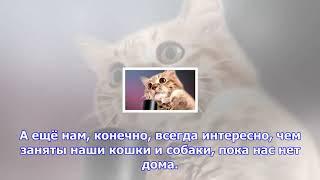 Про животных на видеосервисе рамблер/видео